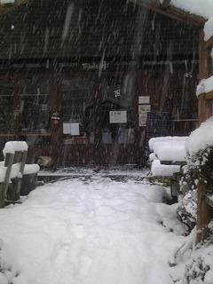 雪の日1.jpg